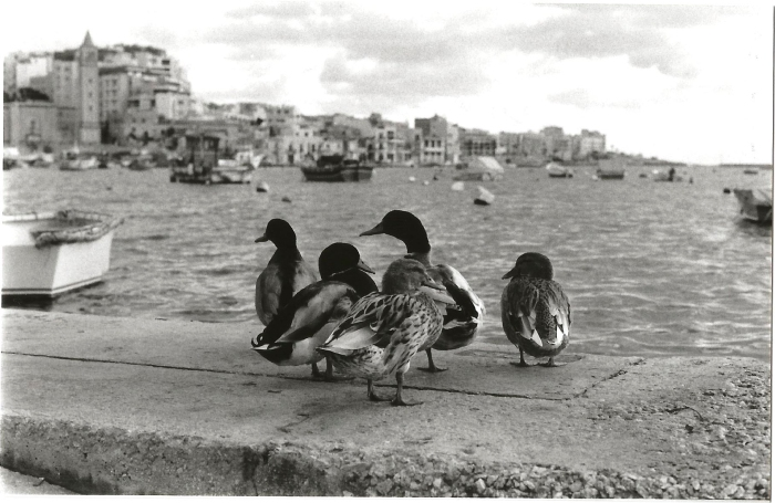 Malta '16